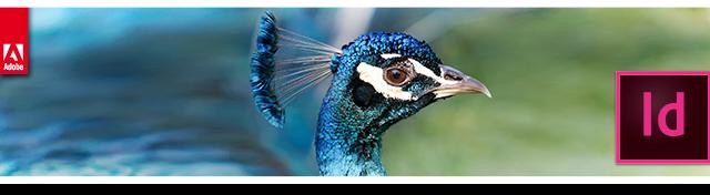 Seminario gratuito InDesign CC para publicaciones digitales - Cabecera